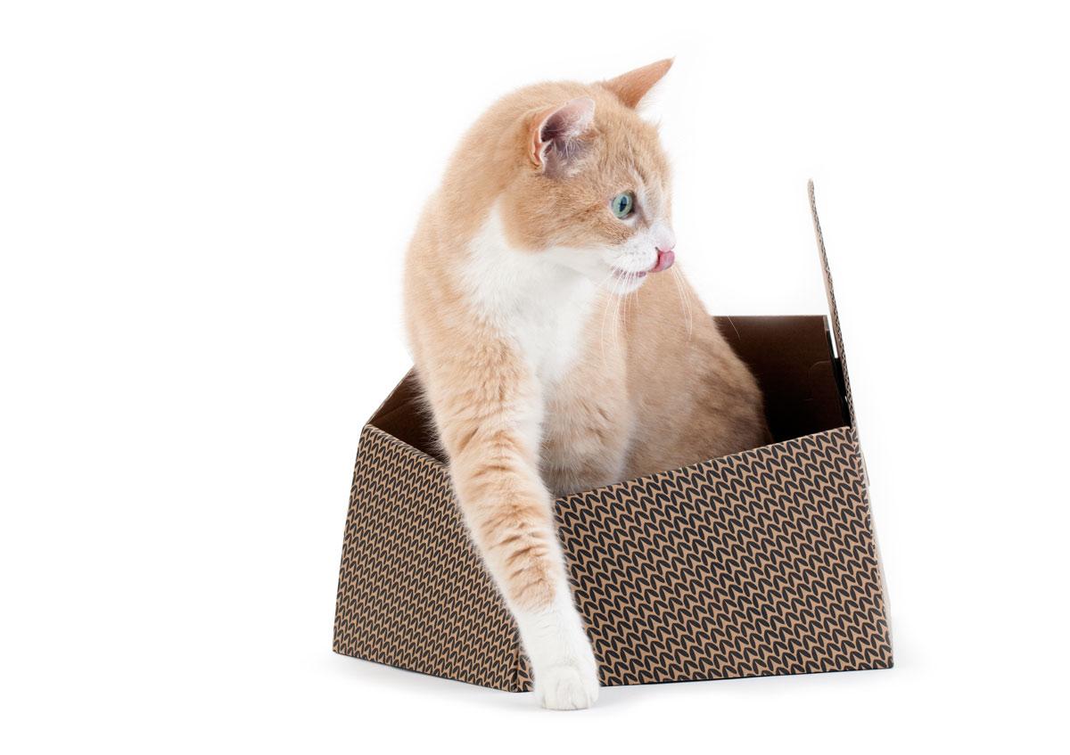Alessandra Pasetti Cat in the box