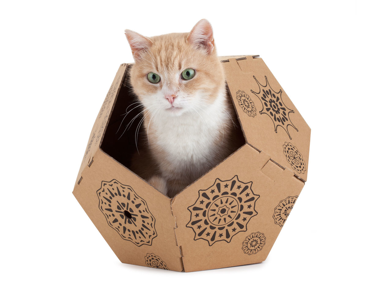 cat in the box alessandra pasetti designer. Black Bedroom Furniture Sets. Home Design Ideas